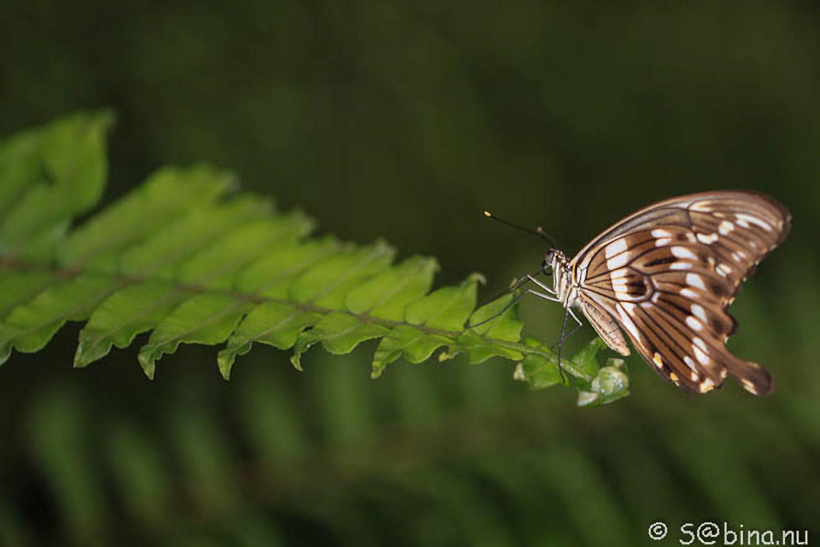 3 september 2014 – Papiliorama Kerzers