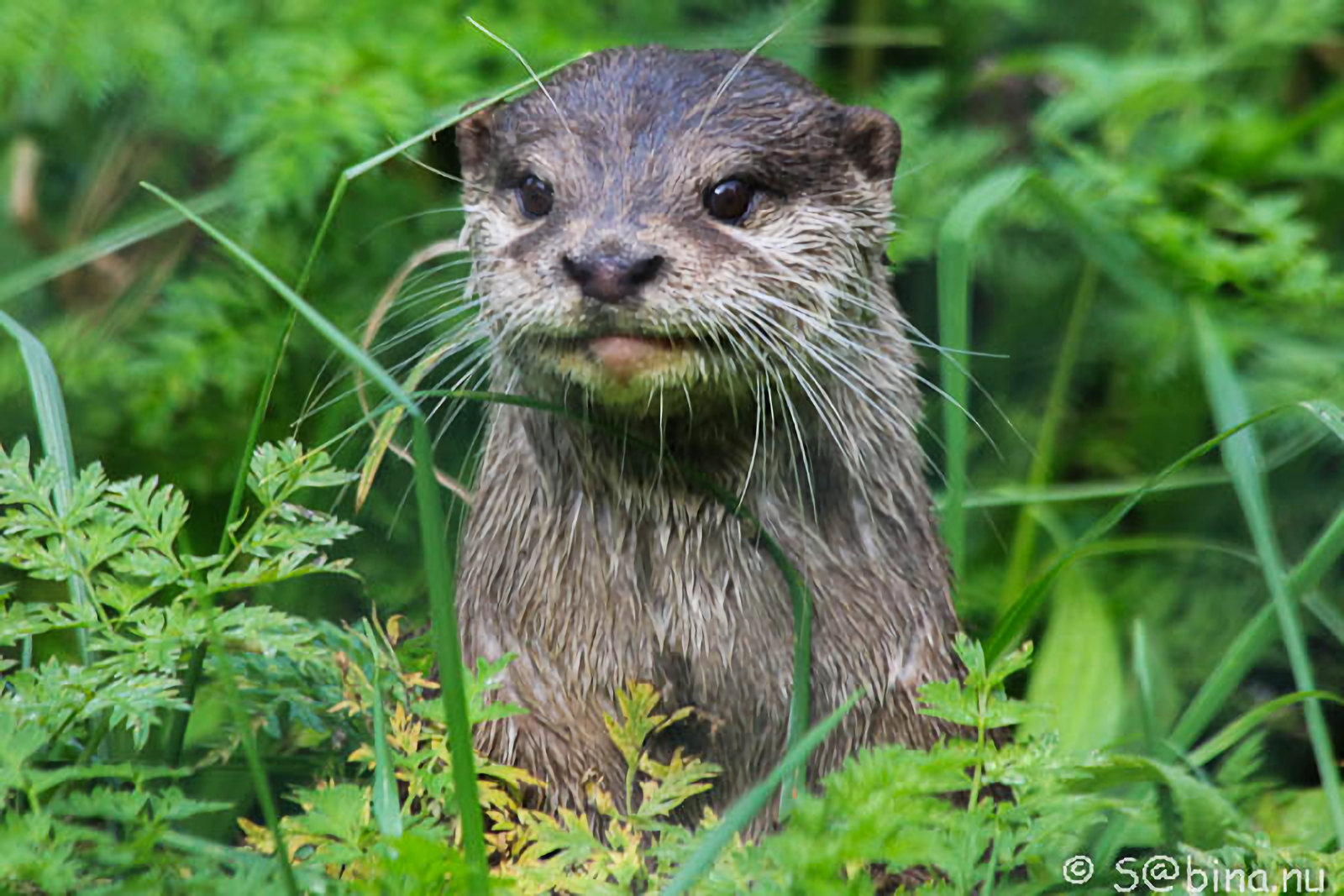 10 september 2014 – Otter-/zwijn fotoshoot