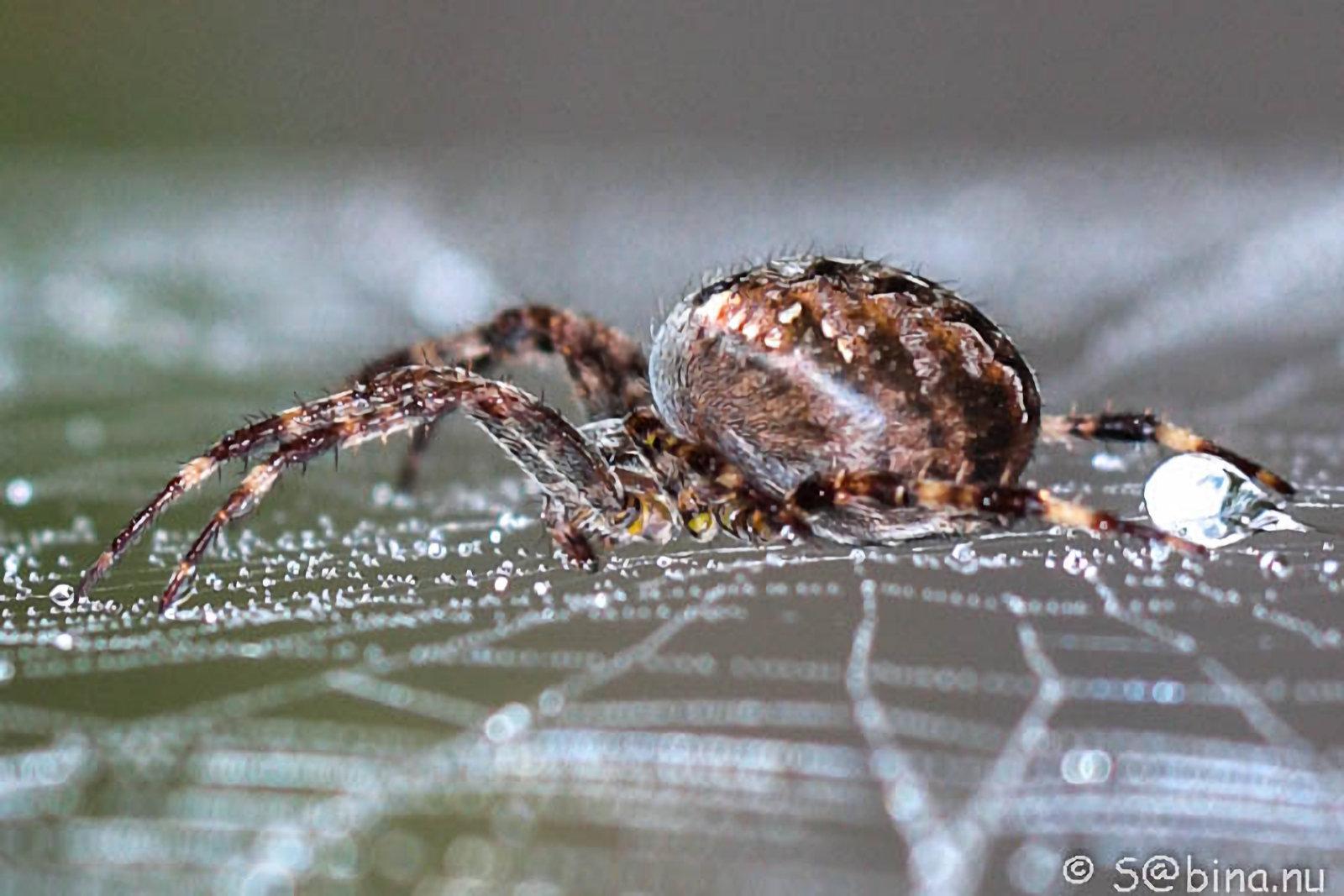 20 september 2014 – Kruisspinnen