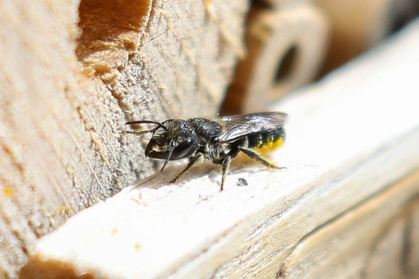 19 juli 2020 – Nieuwe bewoners in ons bijenhotel!