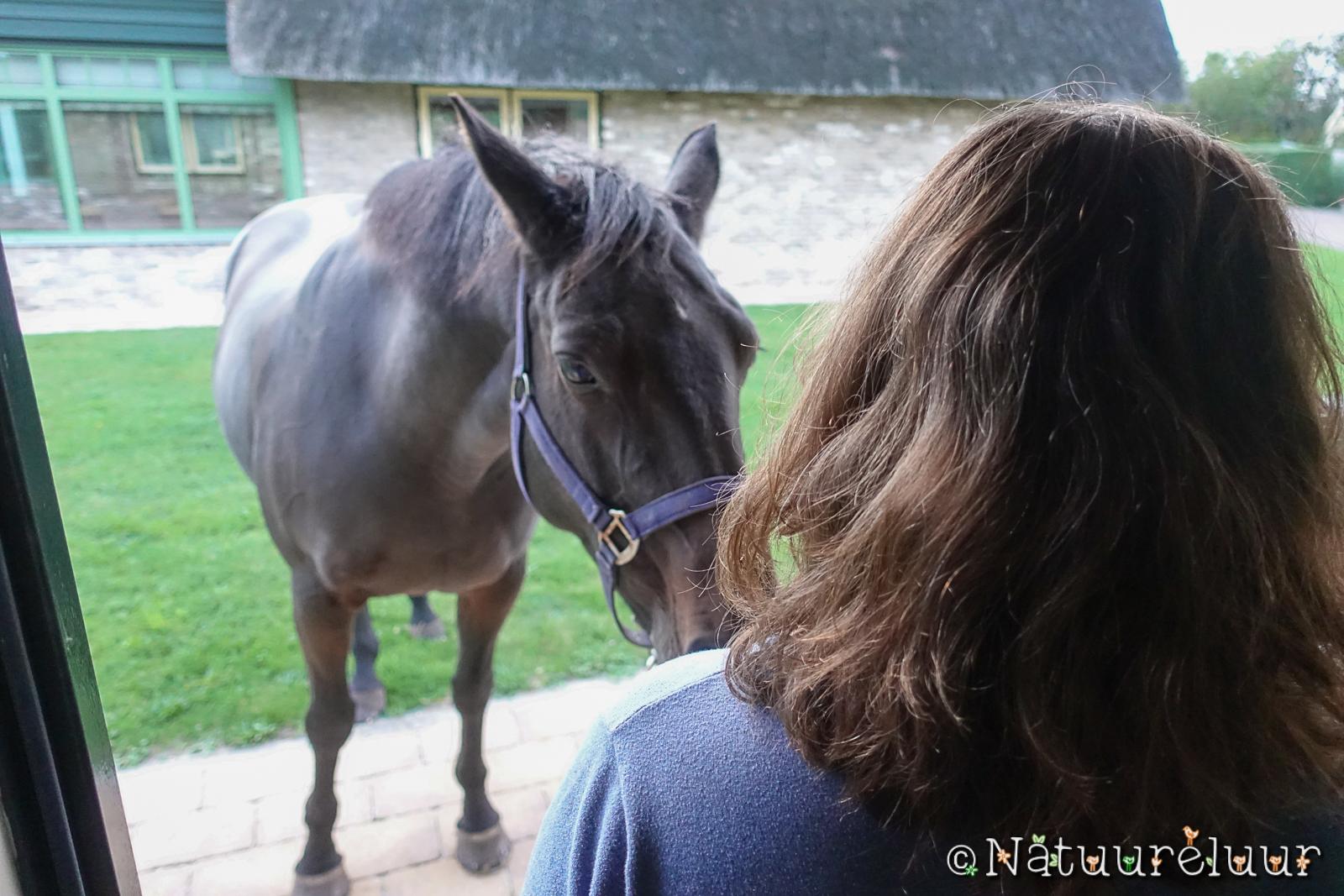 7 oktober 2020 Er… staat… een… paard… voor de deur ;-)